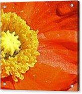 Poppy Up Close Acrylic Print