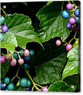 Porcelain Berries Acrylic Print