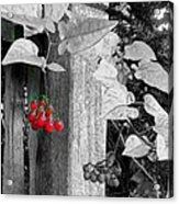 Porch Post Berries Color Punch Acrylic Print