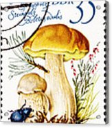 Porcini Mushroom Boletus Edulis Acrylic Print