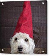 Portrait Of A Garden Gnome Acrylic Print