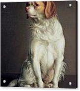 Portrait Of A King Charles Spaniel Acrylic Print