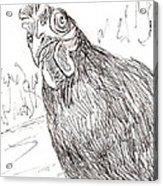 Portrait Of A Little Black Chicken Acrylic Print