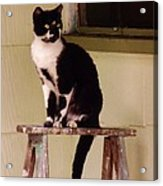 Portrait Of A Painted Cat Acrylic Print