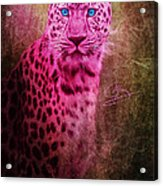 Portrait Of A Pink Leopard Acrylic Print