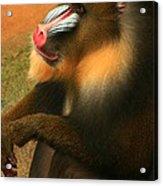 Portrait Of A Primate  Acrylic Print