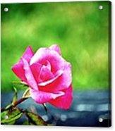 Portrait Of A Rose Acrylic Print