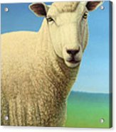 Portrait Of A Sheep Acrylic Print by James W Johnson