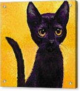 portrait of a small black cat named  LuLu Acrylic Print