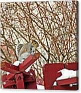 Winter Squirrel Acrylic Print