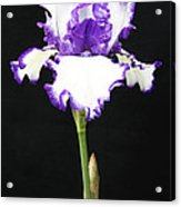 Portrait Of An Iris Acrylic Print