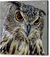 Portrait Of An Owl Acrylic Print