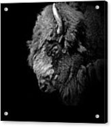 Portrait Of Buffalo In Black And White Acrylic Print