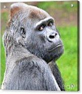 Portrait Of King Kongs Cousin II Acrylic Print