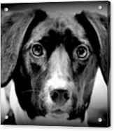 Portrait Of Man's Best Friend II Acrylic Print