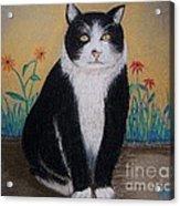 Portrait Of Teddy The Ninja Cat Acrylic Print