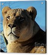 Portrait Of The Mighty Queen Acrylic Print