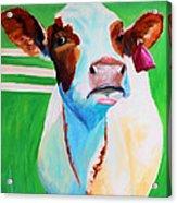 Posing Cow Acrylic Print