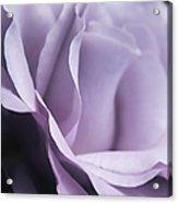 Posing Purple Rose Flower Acrylic Print