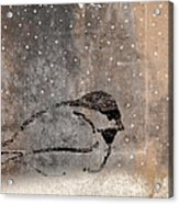 Postcard Chickadee In The Snow Acrylic Print