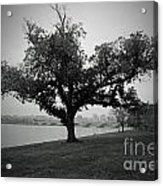 Potomac Tree Acrylic Print