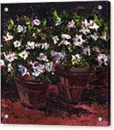 Pots Of Flowers Acrylic Print