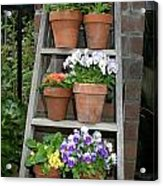 Potted Flower On Ladder Acrylic Print