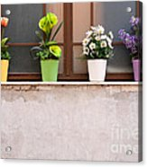 Potted Flowers 01 Acrylic Print by Rick Piper Photography