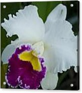 Potted Orchid Acrylic Print