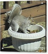 Potted Squirrel Acrylic Print