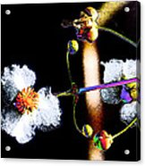 Powder Flower Acrylic Print
