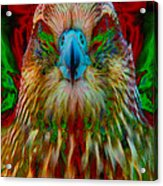 Power Hawk 1 Acrylic Print by Colleen Cannon