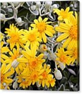 Power Of Yellow Acrylic Print