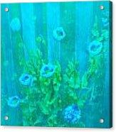 Papaver Orientale 4 Acrylic Print