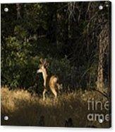 pr 140 -Deer in the Grass Acrylic Print