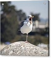 pr 175 - The Tired Seagull Acrylic Print