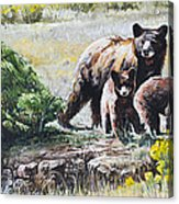 Prairie Black Bears Acrylic Print by Aaron Spong