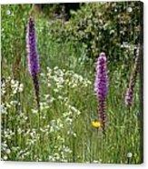 Prairie Blossoms Acrylic Print