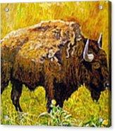 Prairie Companions Acrylic Print
