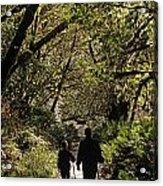 Prairie Creek Redwood State Park With Sun Breaking Through Trees Acrylic Print