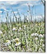 Prairie Flowers And Grasses Acrylic Print