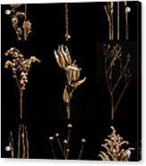 Prairie Plant Still Life Acrylic Print