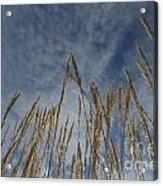 Prairie Prayers Acrylic Print