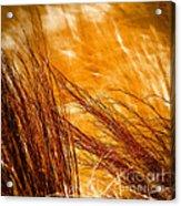Prairie Winds Acrylic Print