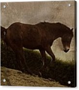 Prancing Horse Acrylic Print
