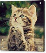 Praying Cat Acrylic Print