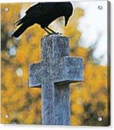 Praying Crow On Cross Acrylic Print
