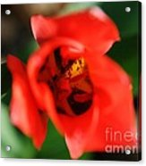 Pre-pollination  Acrylic Print