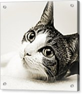 Precious Kitty Acrylic Print by Andee Design