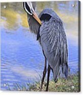 Preening By The Pond Acrylic Print